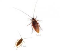 Controle a insetos rasteiros