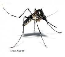 Combate a insetos voadores